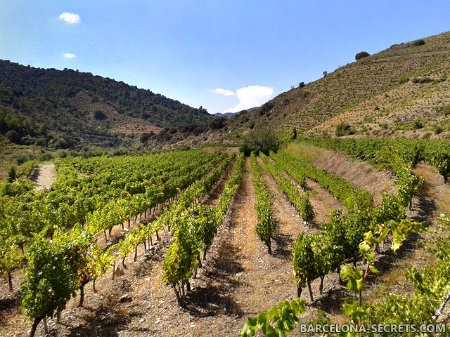 catalonia wineyards